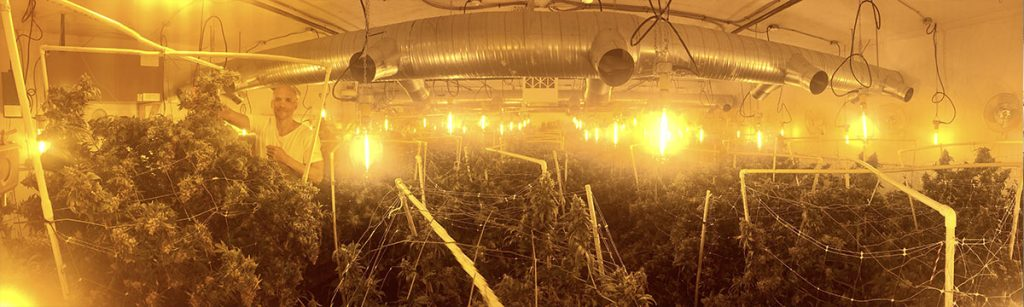hps lighting, grow operation, weed, marijuana