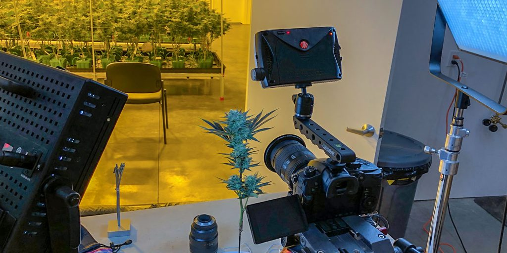 weed photo, gh5, cannabis photo, greenplanet nutrients, growing exposed