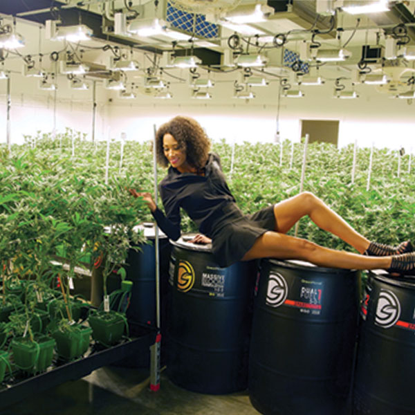 girl weed instagram, dual fuel, green planet nutrients