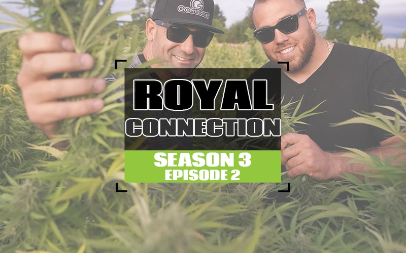 S3 EP2 A Royal Connection_white