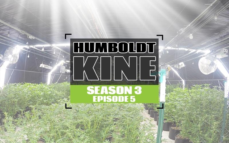 S3 EP5 Humboldt Kine_white