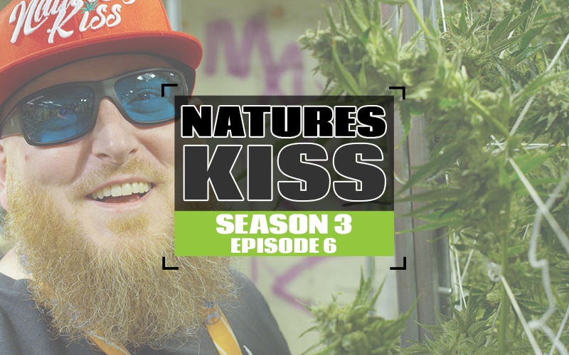 S3 EP6 Natures Kiss_white