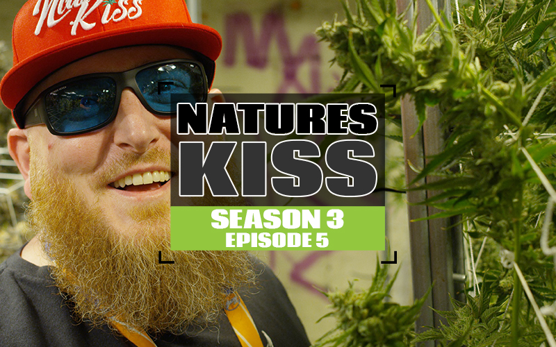 S3 EP5 Natures Kiss-WEBSITETHUMB