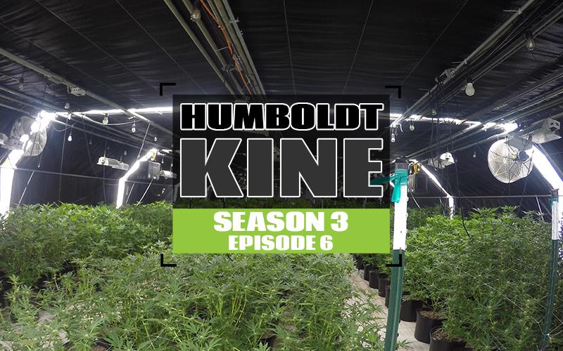 S3 EP6 Humboldt Kine-WEBSITETHUMB