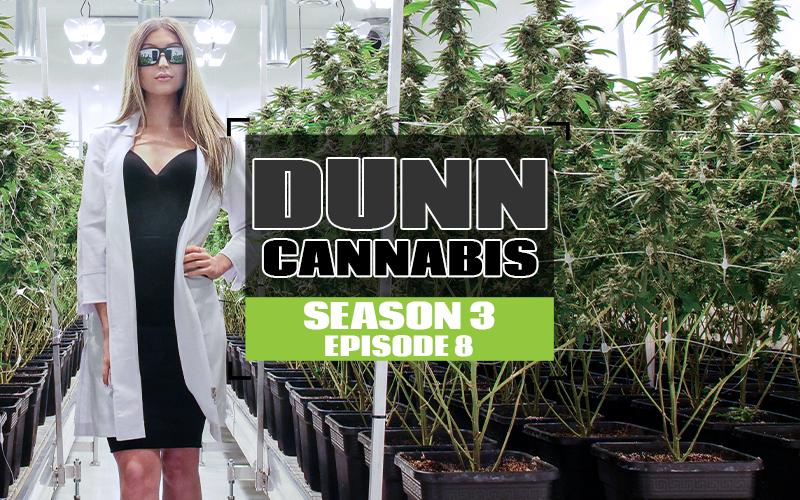 S3 EP8 Dunn Cannabis copy